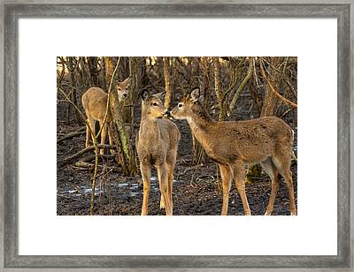 Fondness    Framed Print by James Marvin Phelps