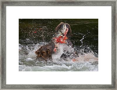 Eat Free Framed Print featuring the photograph Food Fight by Tim Grams