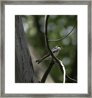 Food For The Young Framed Print by Thomas Young