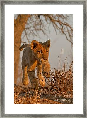 Footloose Framed Print by Ashley Vincent