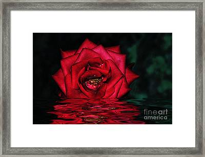 For Lovers Of Rich Red... Framed Print by Kaye Menner