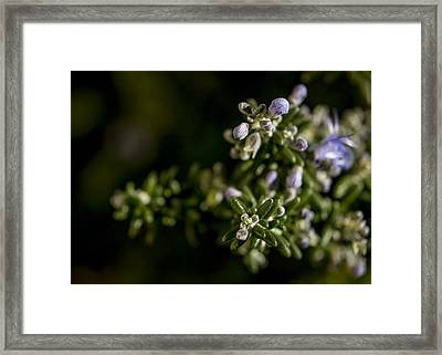For Remembrance Framed Print by Caitlyn  Grasso