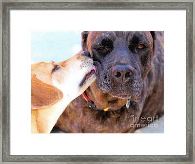 For The Love Of Dogs Framed Print by Janice Rae Pariza
