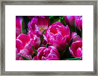 For You - Featured 3 Framed Print by Alexander Senin