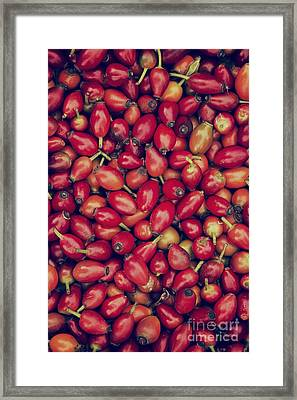 Foraged Rosehips  Framed Print by Tim Gainey