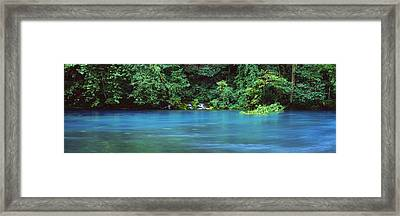 Forest At The Riverside, Big Spring Framed Print by Panoramic Images