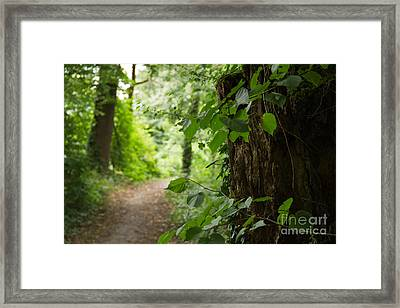 Forest Framed Print by Christine Sponchia