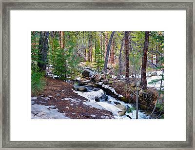 Forest Creek 4 Framed Print by Brent Dolliver