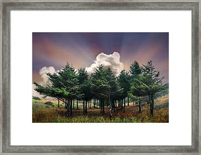 Forest Dawn Framed Print by Debra and Dave Vanderlaan