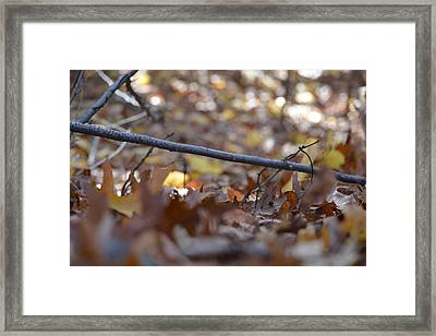 Forest Floor Framed Print by Nicholas Outar