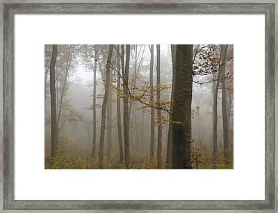 Forest In Autumn Framed Print by Matthias Hauser