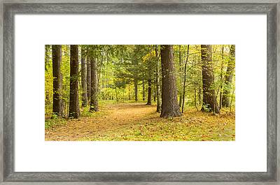Forest In Autumn, New York State, Usa Framed Print by Panoramic Images
