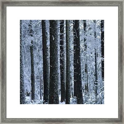 Forest In Winter Framed Print by Bernard Jaubert