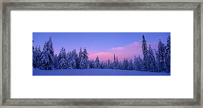 Forest In Winter, Dalarna, Sweden Framed Print by Panoramic Images