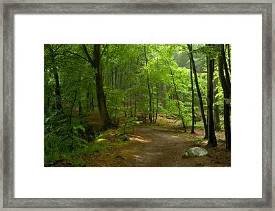 Forest Framed Print by Iryna Soltyska