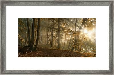 Forest Light Framed Print by Norbert Maier