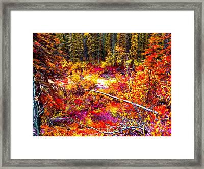 Forest Of Colors Framed Print by John Kreiter