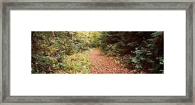 Forest, Old Forge, Herkimer County, New Framed Print by Panoramic Images