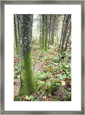 Forest Opening Framed Print by Graham Foulkes