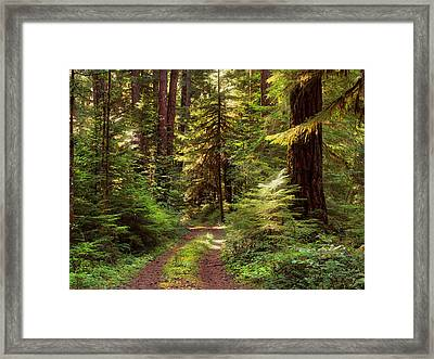 Forest Path 4 Framed Print by Leland D Howard