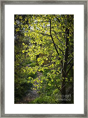 Forest Path Framed Print by Elena Elisseeva