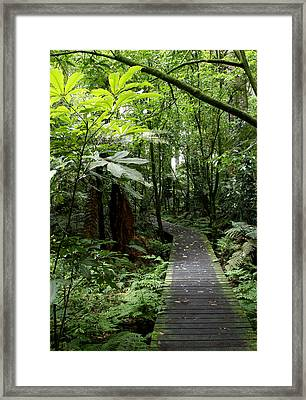 Forest Path Framed Print by Les Cunliffe