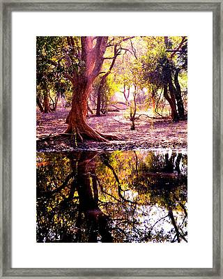Forest Reflection Framed Print by Deepti Chahar