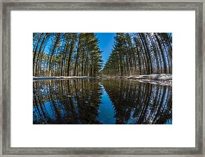 Forest Reflections Framed Print by Randy Scherkenbach