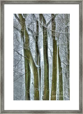 Forest Sentinels Framed Print by David Birchall