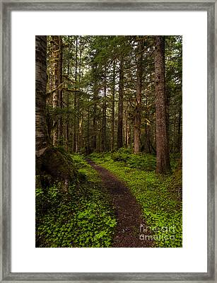 Forest Serenity Path Framed Print by Mike Reid