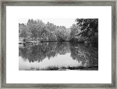 Forest Snow Framed Print by Miguel Winterpacht
