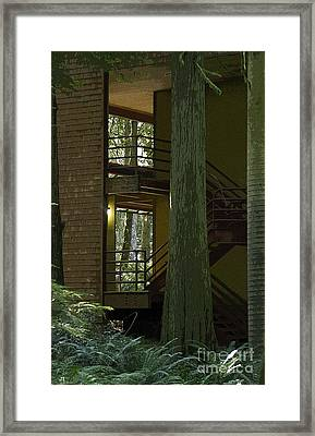 Forest Stairway Framed Print by Jeanette French