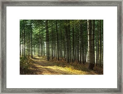 Forest Sun Rays Framed Print by Svetlana Sewell