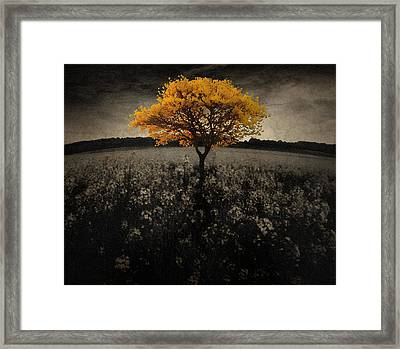 Forever You Framed Print by Brett Pfister