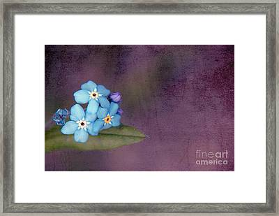 Forget Me Not 02 - S0304bt02b Framed Print by Variance Collections