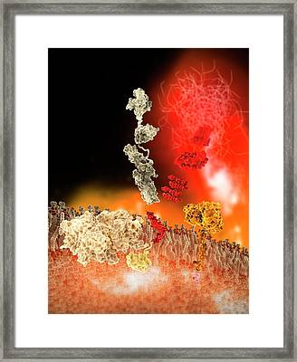 Formation Of Amyloid Beta Protein Framed Print by Ramon Andrade 3dciencia