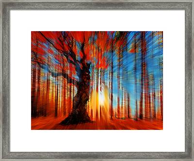 Forrest And Light Framed Print by Tony Rubino