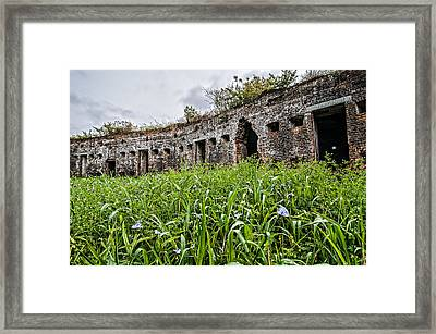 Fort Macomb Overgrown Framed Print by Andy Crawford