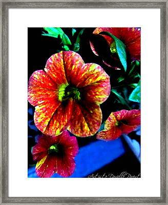 Fortinos Petunias Framed Print by Danielle  Parent