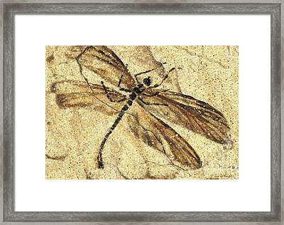 Fossil Dragonfly Framed Print by JQ Licensing