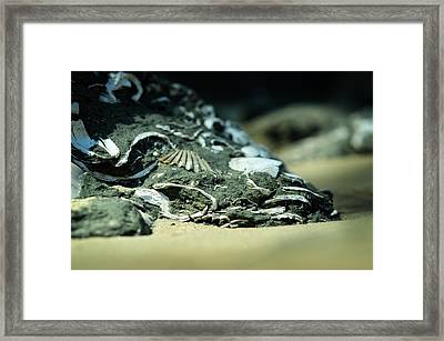 Fossil Fragments Framed Print by Rebecca Sherman
