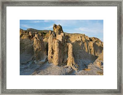 Fossil Tree Stumps Framed Print by David Parker
