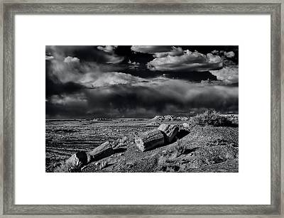 Fossilized And Petrified Trees Framed Print by Jerry Ginsberg