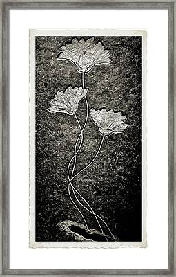 Fossilized Flowers Framed Print by Dan Sproul
