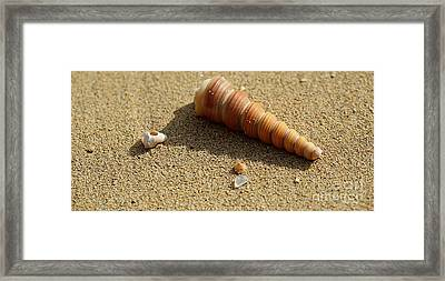 Underwater Diva Framed Print featuring the photograph Found Shells by Cheryl Young