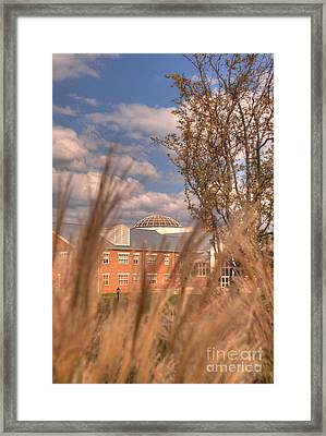 Founders Hall Through The Grasses Framed Print by Mark Dodd