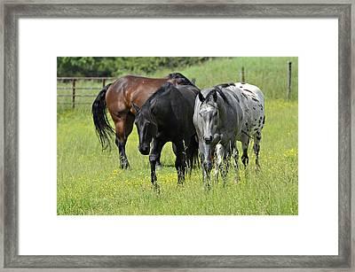 Four Horses Framed Print by Susan Leggett