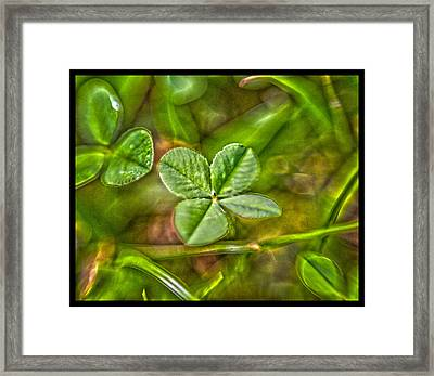 Four Leaf Clover Framed Print by Lisa Sorrell