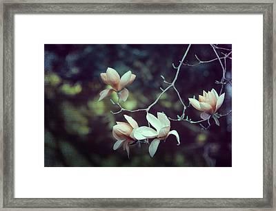 Four Magnolia Flower Framed Print by Marianna Mills