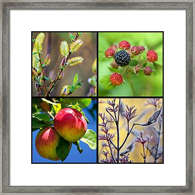 Four Seasons Plants Square Framed Print by Christina Rollo